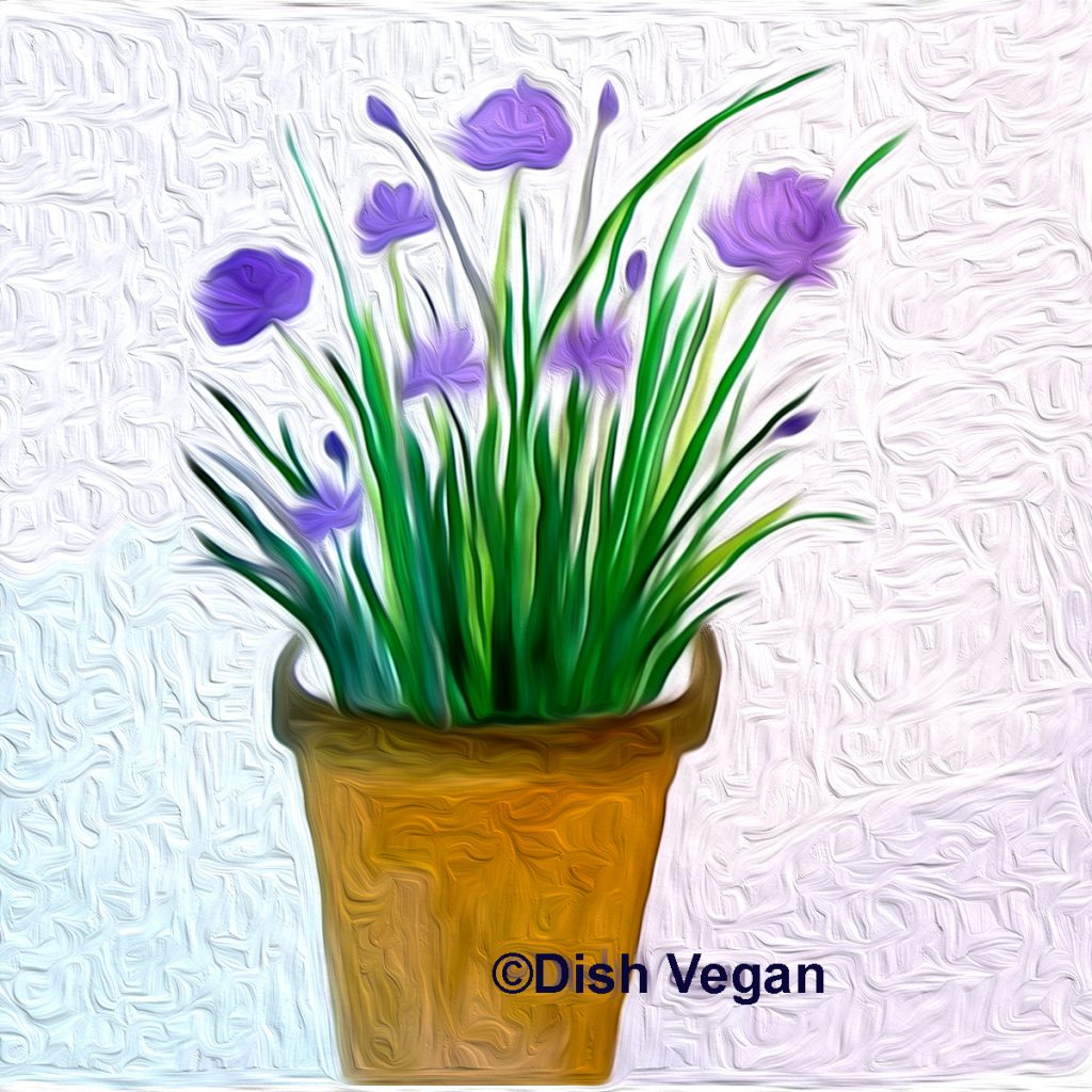 A bit about chives _watercolor + digital